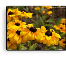 Bright Flowers attracting the wasps Canvas Print