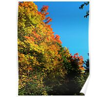 Flowing leaves Poster