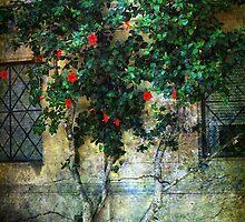 Wallflower by Mike Matthews