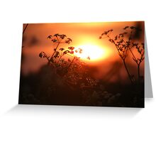 As the sunsets Greeting Card