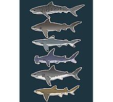 Sharks Photographic Print