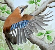 A Jay in flight by aquartistic