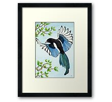 A Magpie in flight Framed Print