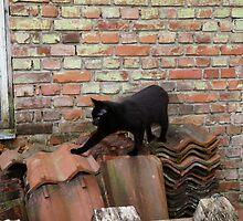 Black Cat Trespassing by HELUA