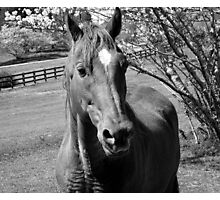 Horse in B&W Photographic Print