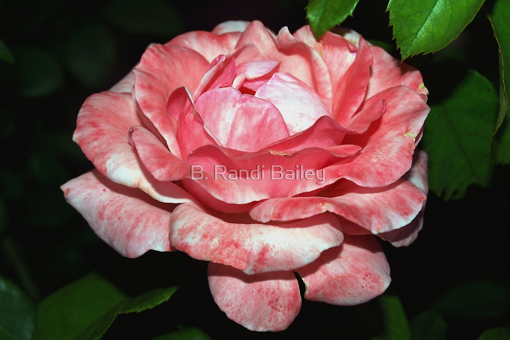 Rouged rose by ♥⊱ B. Randi Bailey