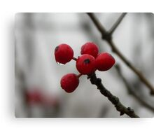 Winter's Red Canvas Print