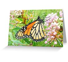 Monarch butteryfly on wild milkweed Greeting Card