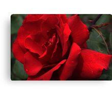 Roses in my garden - last summer Canvas Print
