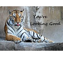 "Greeting Card Tiger ""You're Looking Good"" Photographic Print"