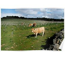 Cows grazing in a field full of flowers Poster
