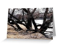 Willow trees along the Rideau River Greeting Card