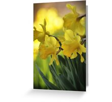 The Spring Daffodils Greeting Card