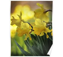 The Spring Daffodils Poster