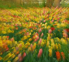 Spring colors - my camera impressionistic atempt by roumen