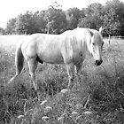 1990 - equine encounter by moyo