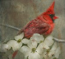 """Spring Special"" by Melinda Stewart Page"