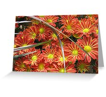 Red Flower Meets Green Spikes Greeting Card
