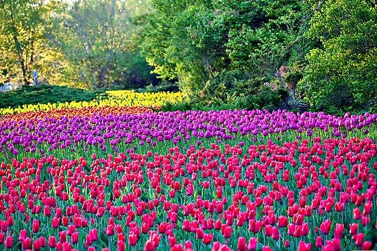The Tulip Fanclub Flat,550x550,075,f