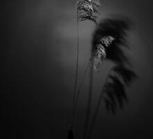 Reeds by Dirk Michael Dudat