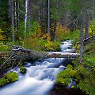 Fall on the Roaring River by Randall Ingalls