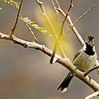 Himalayan Bulbul by Om Yadav
