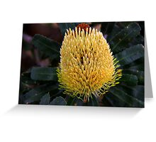 Banksia sceptrum Greeting Card