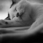 Sleeping Kitten by Dirk Michael Dudat
