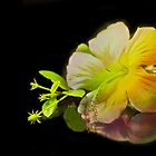 Hibiscus on Black by BoB Davis