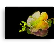 Hibiscus on Black Canvas Print