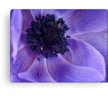 Anemone swirls Canvas Print