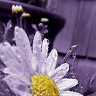 daisy in the rain by tego53
