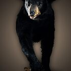 Black Bear by bundtm