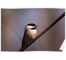 Chickadee - Ottawa, Ontario Poster