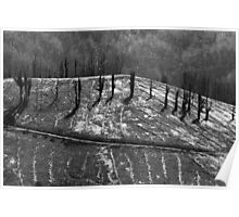 Logging Lines Poster