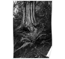 Tree and Fern - Mt Worth Poster