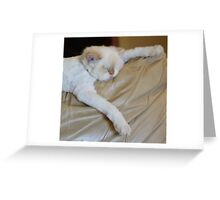 cat nap heaven Greeting Card
