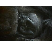 Silverback... sleeping Photographic Print