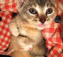 Cuddle Kittens by Josh Glass