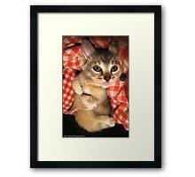 Cuddle Kittens Framed Print