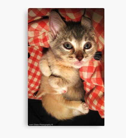 Cuddle Kittens Canvas Print