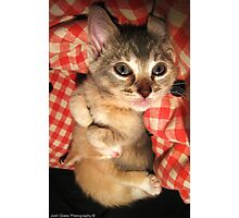 Cuddle Kittens Photographic Print