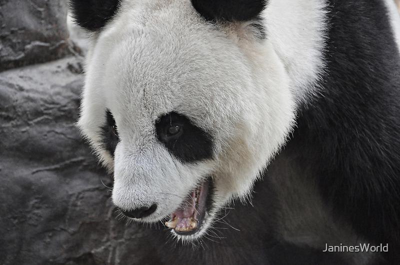 Panda Mania!!! by JaninesWorld