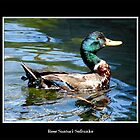 Smiling Duck by Rose Santuci-Sofranko