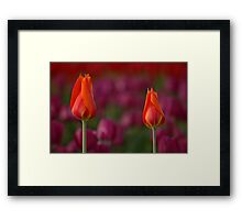 Two Of A Kind Framed Print