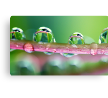 Drops of Green Canvas Print