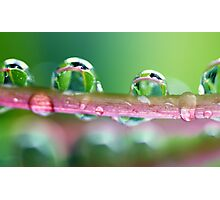 Drops of Green Photographic Print