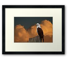 The Evening Perch Framed Print
