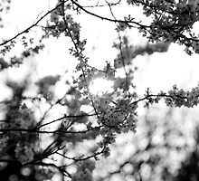 Black and White Blossom Sunset by Josh Hales