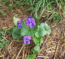 Sweet Violets by JoyceAnn